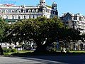 Bellaombra de la plaça Francesc Macià P1230096.JPG