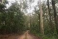 Benandarah NSW 2536, Australia - panoramio (56).jpg