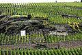 Beste Weinlagen an der Mosel. 03.jpg