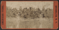 Binnen Falls and Bridge, Prospect Park, from Robert N. Dennis collection of stereoscopic views.png