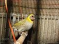 Bird (131417573).jpeg