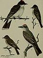 Bird lore (1908) (14564191400).jpg