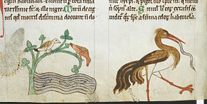 Topographia Hibernica - Kingfishers and a stork, from British Library Royal MS 13 B VIII, c. 1220