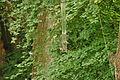 Birds in Stover Country Park (6708).jpg