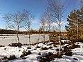 Birken im Weidmoos Mitte Februar (3).jpg