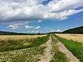Blick auf den Steinberg - panoramio (1).jpg