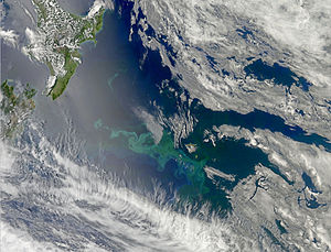 English: Massive phytoplankton bloom around Ne...