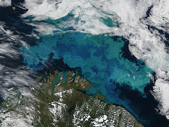 Coccolithophore - The milky blue colour of this phytoplankton bloom in Barents Sea strongly suggests that it contains coccolithophores.