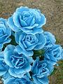 Blue Roses1.jpg