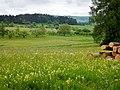 Blumenwiese - panoramio.jpg