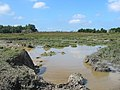 Boggy Hollow near Homsley camp, New Forest. - geograph.org.uk - 552970.jpg