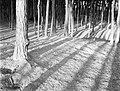 Bos bij Laren, Bestanddeelnr 252-0879.jpg