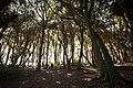 Bosque de arrayanes (29463403005).jpg