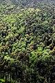 Bosque primario 10.jpg