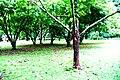 Botanic garden limbe61.jpg