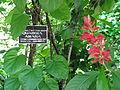 Botanical Garden of Peradeniya 11.JPG