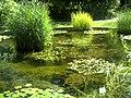 Botanischer Garten Freiburg - Botany Photography - panoramio (7).jpg