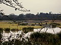 Bowling Green Nature Reserve Topsham - geograph.org.uk - 1113599.jpg