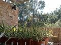 Boyce Thompson Arboretum, Superior, Arizona - panoramio (5).jpg