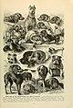 Brehm's Life of animals (6220161571).jpg