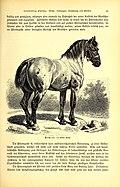 Brehms Tierleben - allgemeine Kunde des Tierreichs - mit 1800 Abbildungen im Text, 9 Karten und 180 Tafeln in Farbendruck und Holzschnitt (1891) (19793474933).jpg