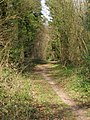 Bridleway from Franklin Farm to Stakes Lane, Corhampton Down - geograph.org.uk - 391077.jpg