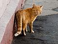 Bronnitsy Sovetskaya Stret Cat Mar 2010 01-3.jpg