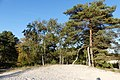 Brunssummerheide P1310867.jpg