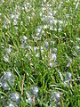 Bubbles on the Grass (476256158).jpg