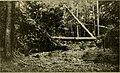 Bulletin (1904) (20235272509).jpg