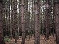 Burnt Wood - geograph.org.uk - 435652.jpg