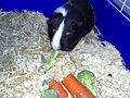 Buster, broccoli & Carrots (516135464).jpg