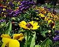 Butchart Gardens - Victoria, British Columbia, Canada (29367850516).jpg