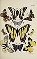 Butterflies from American Insects (1905).jpg