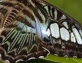 Butterfly 4a (4866607097).jpg
