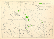 CL-28 Pinus heldreichii range map.png