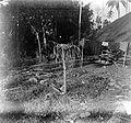 COLLECTIE TROPENMUSEUM Dorpsofferpaal (katoda paraing) in kampong Prai Kareha in Zuid-Soemba TMnr 10001115.jpg