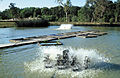 CSIRO ScienceImage 4526 Tullamore Barramundi Farm hatching ponds and aeration equipment south of Cardwell QLD.jpg