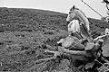 Caballo En El Hierro (8069166).jpeg