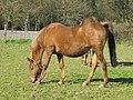 Cabalo, Teo, Galiza 4.jpg