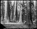 Calaveras Big Trees State Park, ca. 1900.jpg