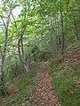 Camí entre Creu de Principi i Coll de l'Abellar (maig 2011) - panoramio.jpg