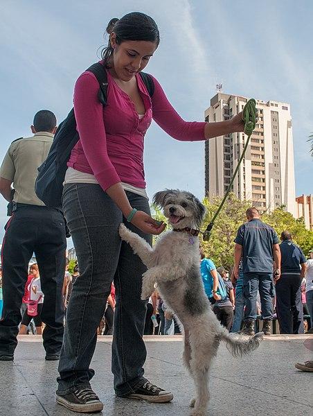 File:Caminata por los perros y animales Maracaibo 2012 (51).jpg