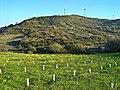 Campos de Arruda dos Vinhos - Portugal (3266425960).jpg