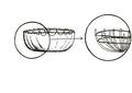 Canoa circular.pdf