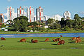 Capivaras Parque Barigui 05 2015 CWB 3469.JPG