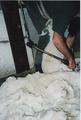 Cashmeregoat shearing.png