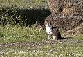 Cat - Kedi.jpg