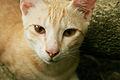 Cat public domain dedication image 0001.jpg