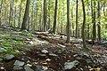 Catoctin Mountain Park-3 (4010604530).jpg